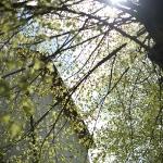 nuembrecht-16-04-2011-c-gino-monaco-1